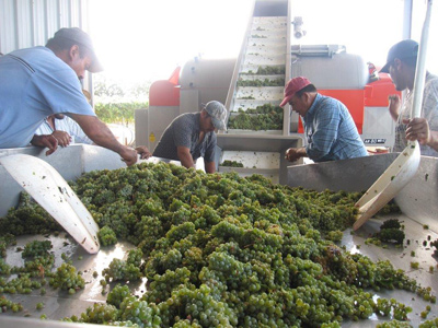 Walter Hansel Winery - Our Wines - Wine Making Process